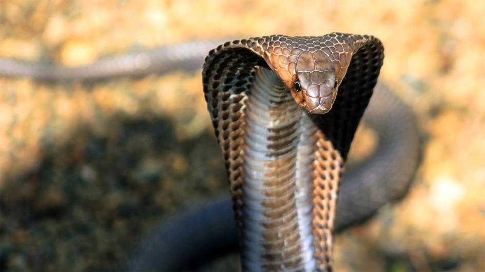 Šta mislite koja je zmija najopasnija? To zavisi od…