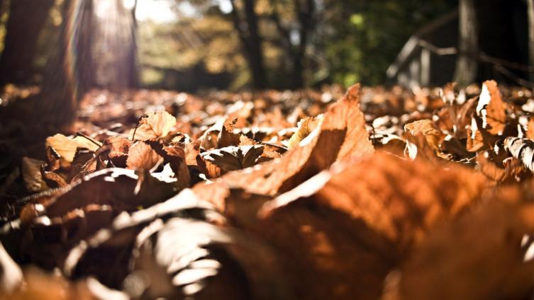 Za vikend umjereno oblačno i sunčano, temperature do 21 stepen