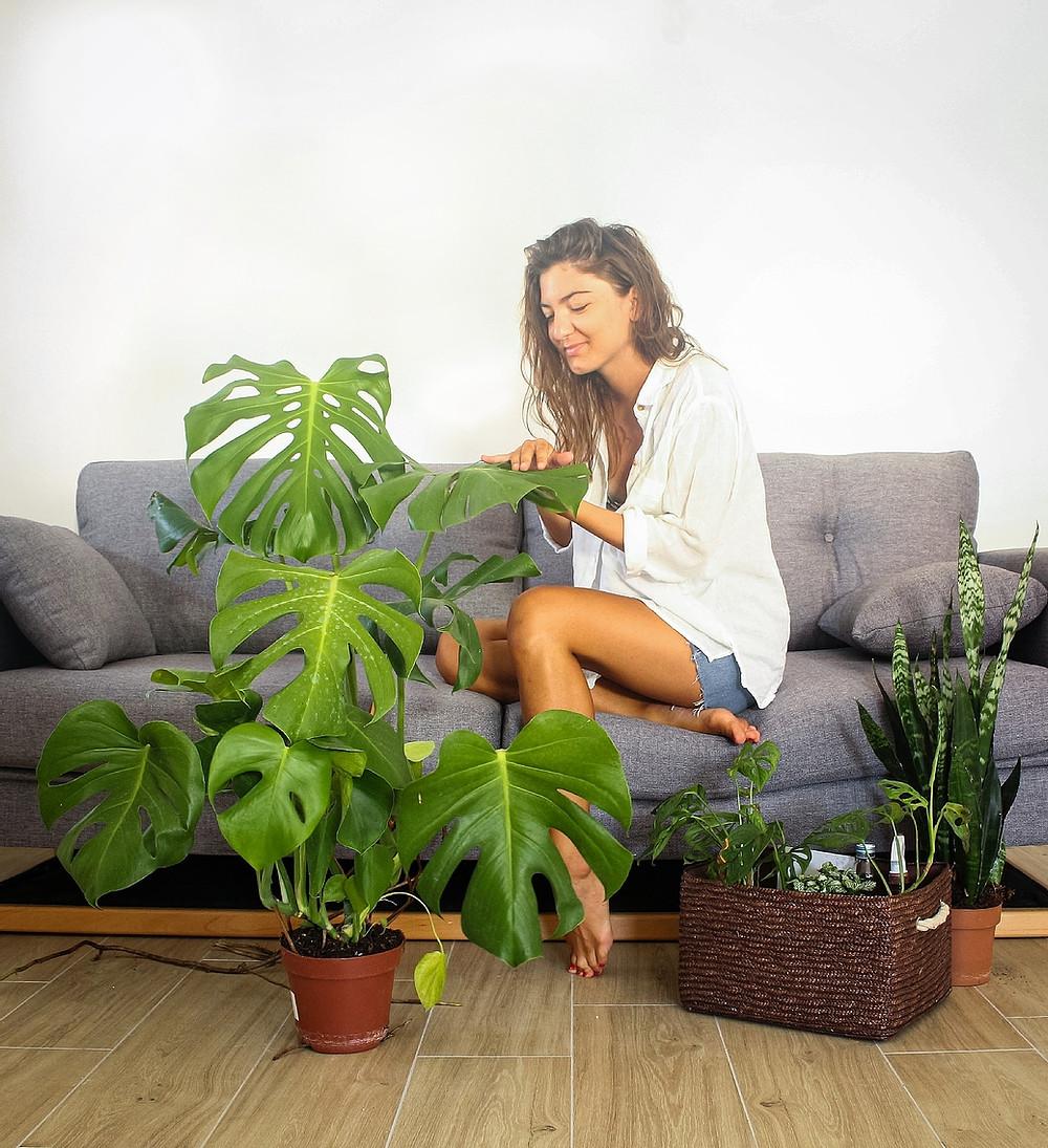 Biljke mogu da vide, čuju, govore, predvide, pamte….