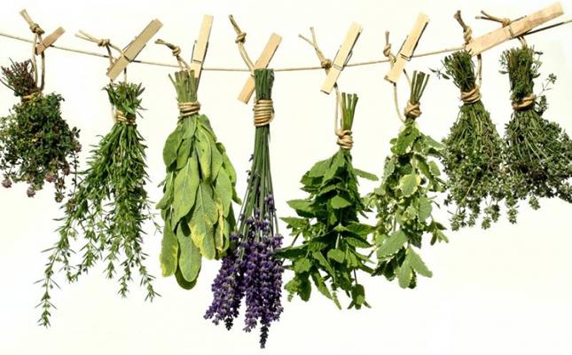 Ovih devet biljaka mogu izliječiti gotovo sve!